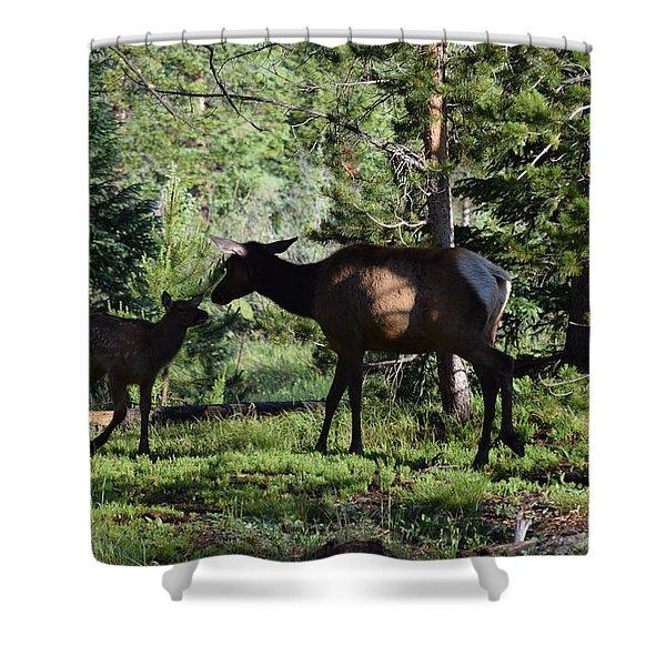 Elk Calf - Mother Rmnp Co Shower Curtain