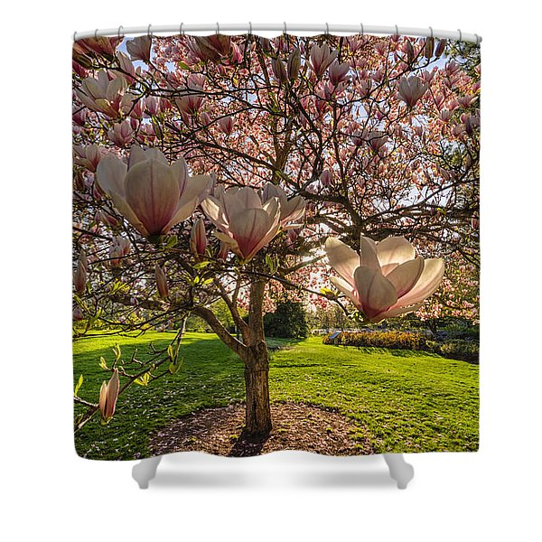 Manito Magnolia In Bloom Shower Curtain