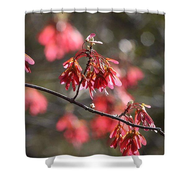 Maple Shower Curtain