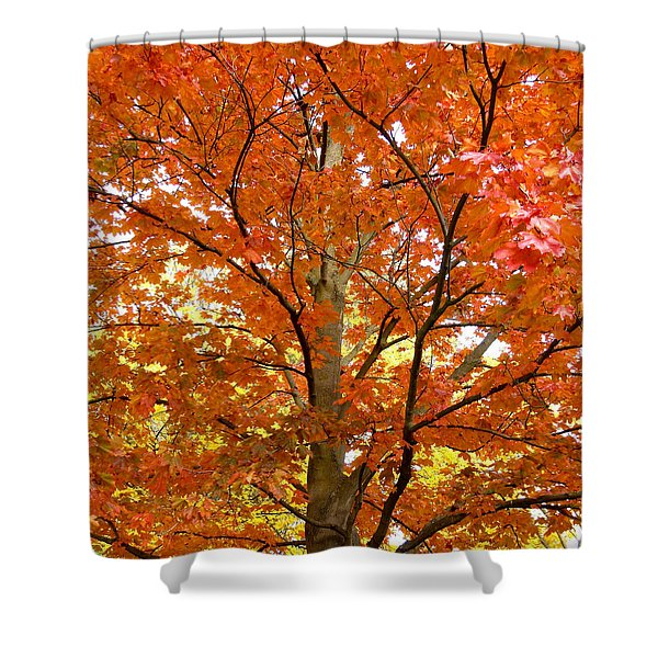 Maple Mania 22 Shower Curtain
