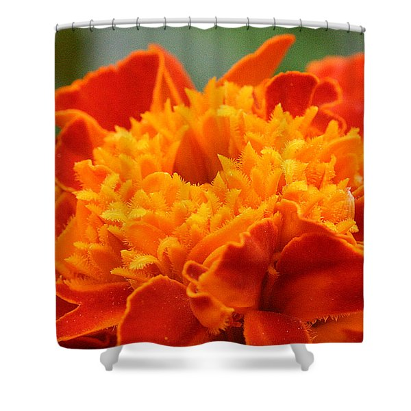Shower Curtain featuring the photograph Marigold Center by William Selander