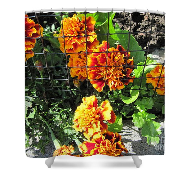 Marigolds In Prison Shower Curtain
