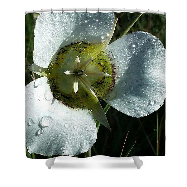 Mariposa Dew 2 Rocky Mountain Meadow Shower Curtain