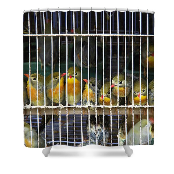 Market Finches Shower Curtain