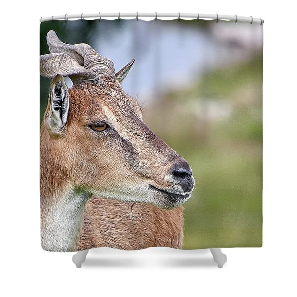 Markhor Shower Curtain