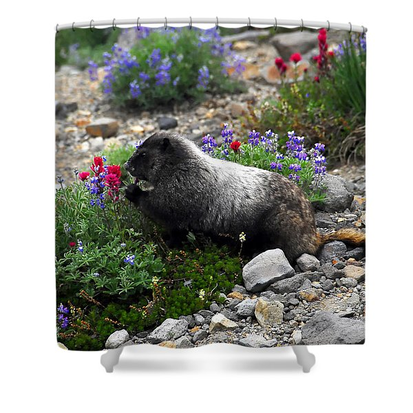 Marmot Feeding Shower Curtain