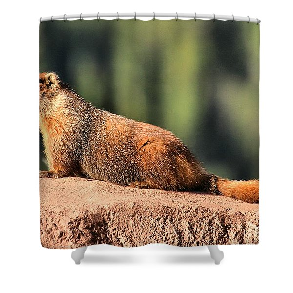 Marmot In The Sun Shower Curtain