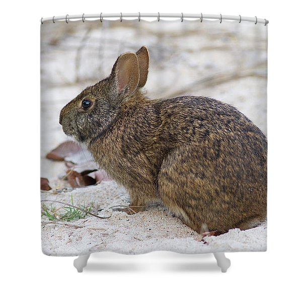 Marsh Rabbit On Dune Shower Curtain