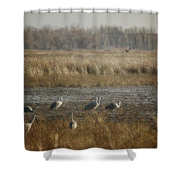 Marsh Wildlife Shower Curtain