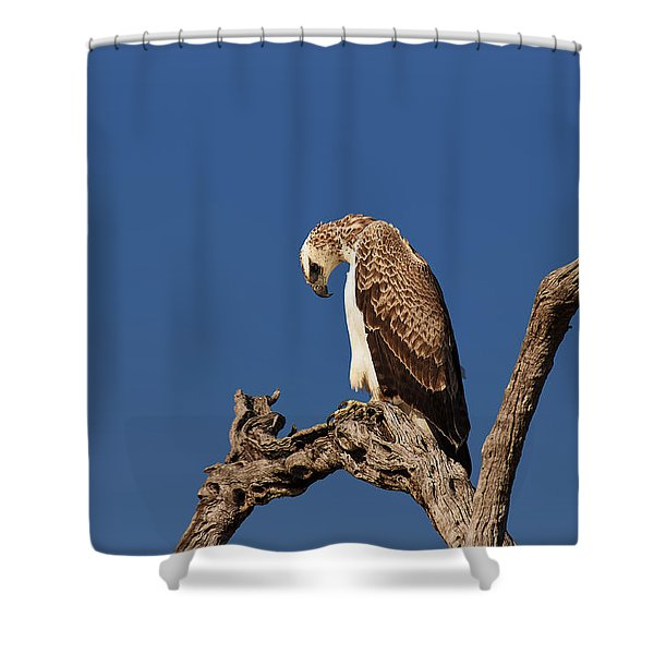 Martial Eagle Shower Curtain