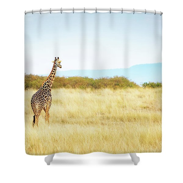 Masai Giraffe Walking In Kenya Africa Shower Curtain