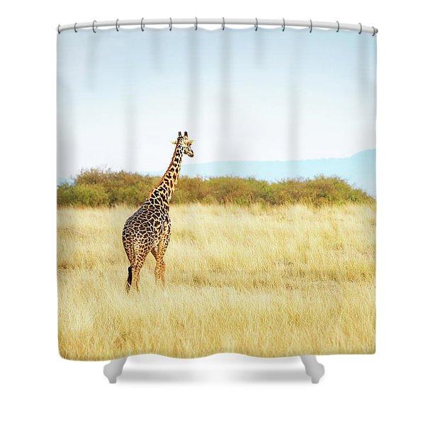Masai Giraffe Walking In Kenya Africa Shower Curtain