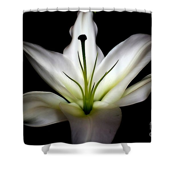 Masculinity Shower Curtain