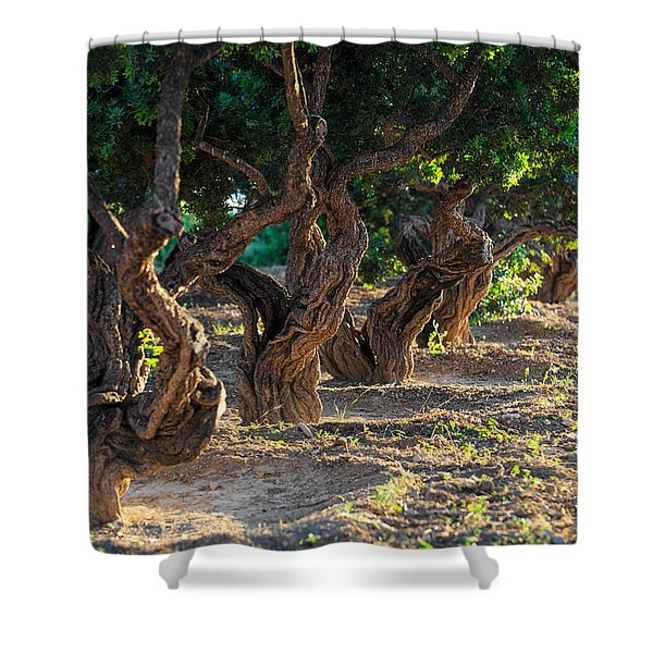 Mastic Tree   Shower Curtain
