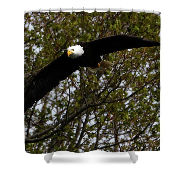 Mature Bald Eagle Shower Curtain