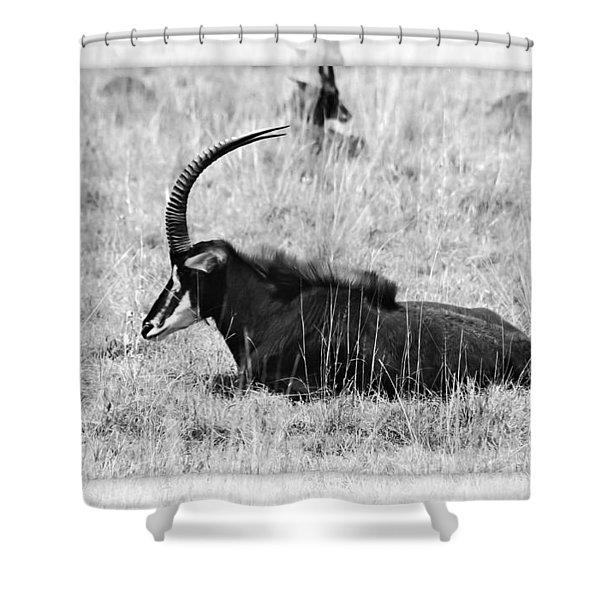 Mbarapi Shower Curtain