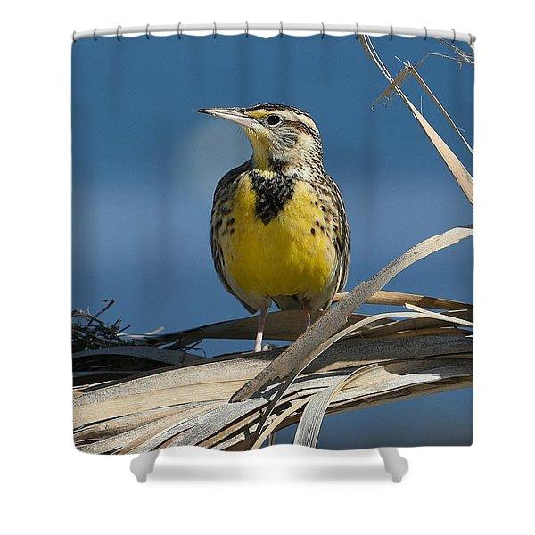 Meadowlark Beauty Shower Curtain