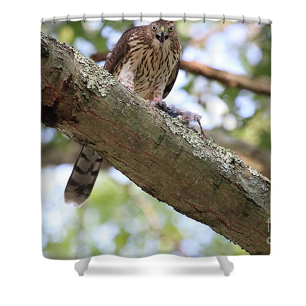 Mean Hawk At Dinner Time Shower Curtain