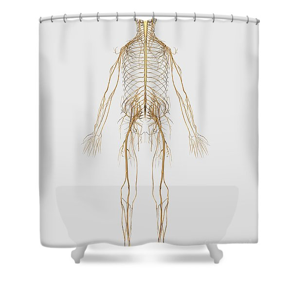 Medical Illustration Of Peripheral Shower Curtain