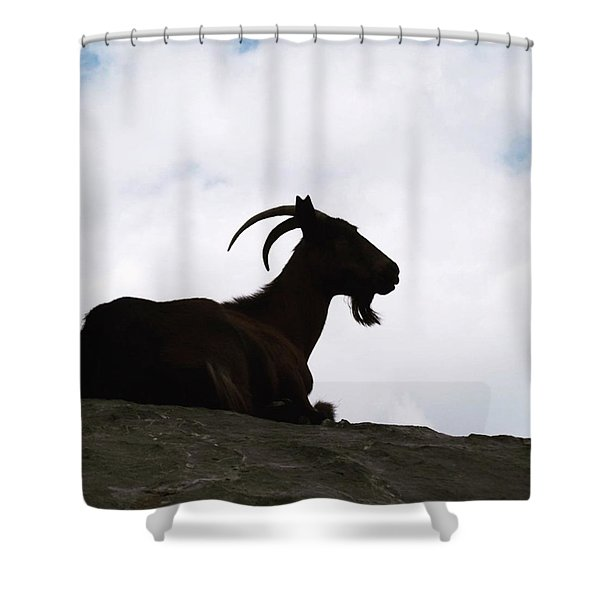 Meditation Goat Up In The Picos De Shower Curtain