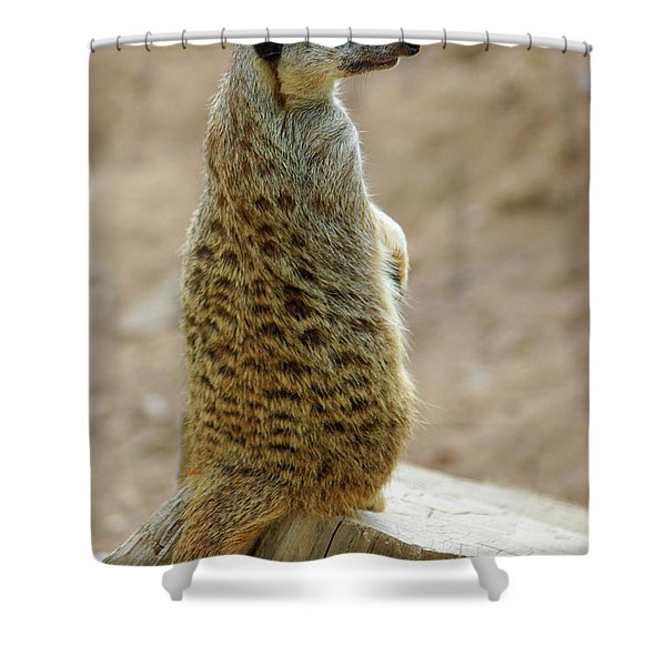 Meerkat Portrait Shower Curtain by Carlos Caetano