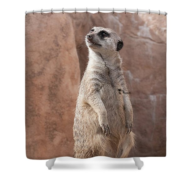 Meerkat Sentry 1 Shower Curtain