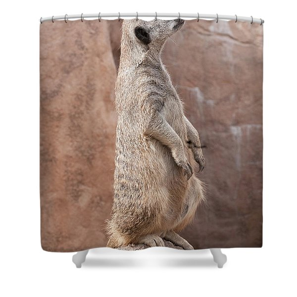 Meerkat Sentry 3 Shower Curtain