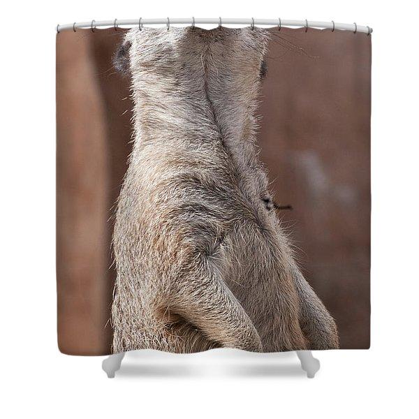 Meerkat Sentry 4 Shower Curtain