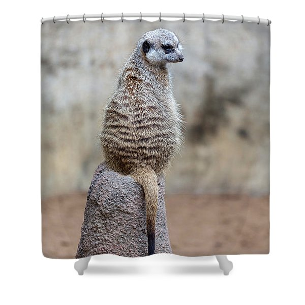 Meerkat Sitting And Looking Right Shower Curtain