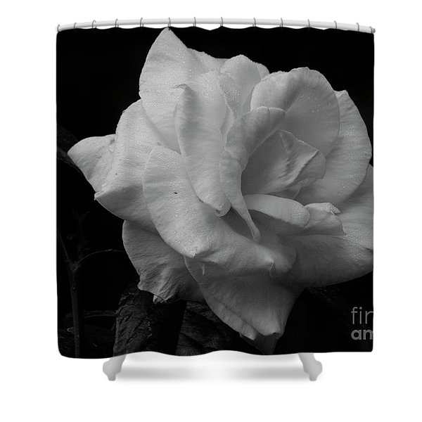 Mendocino Rose01 Shower Curtain