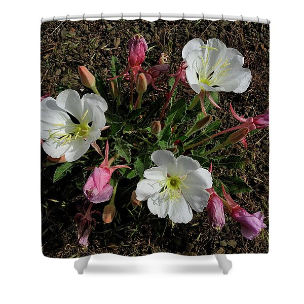 Mesa Blooms Shower Curtain