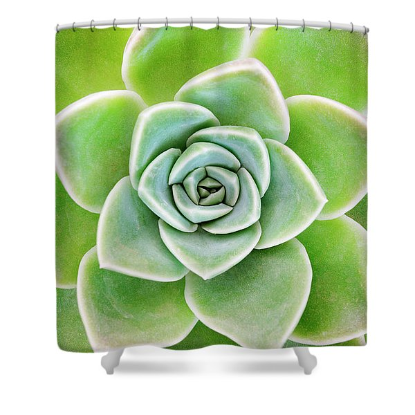 Mexican Snowball Succulent  Shower Curtain
