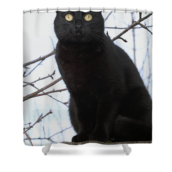 Midi 2 Shower Curtain