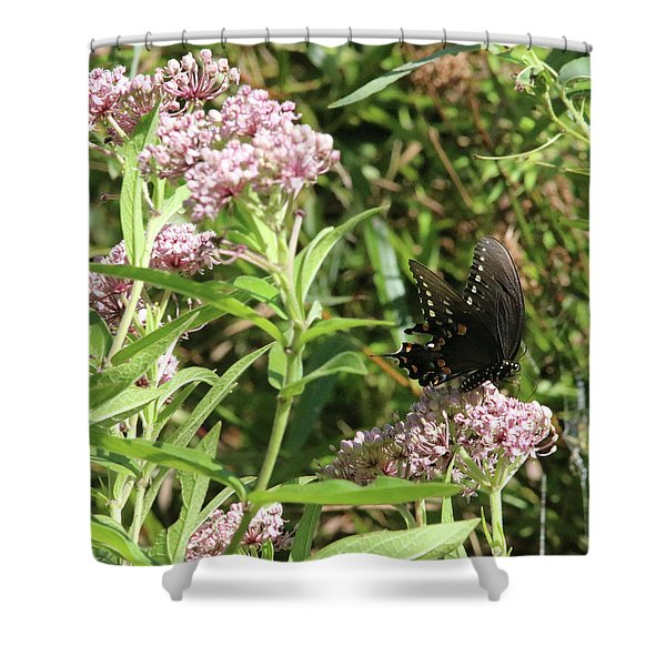 Male American Swallowtail Papilio Polyxenes Shower Curtain