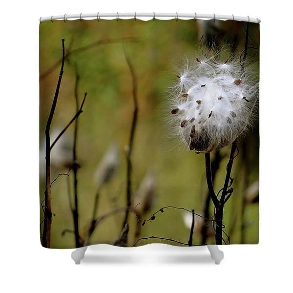 Milkweed In A Field Shower Curtain