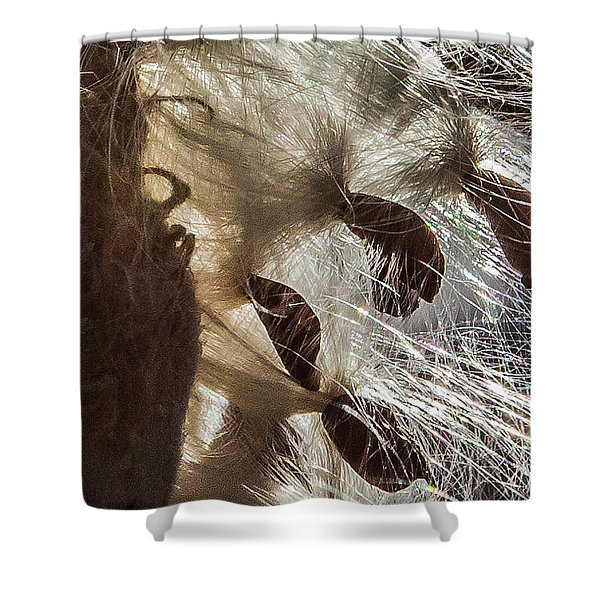 Milkweed Seed Burst Shower Curtain
