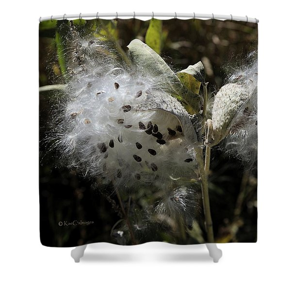 Milkweed Seeds Emerging Shower Curtain