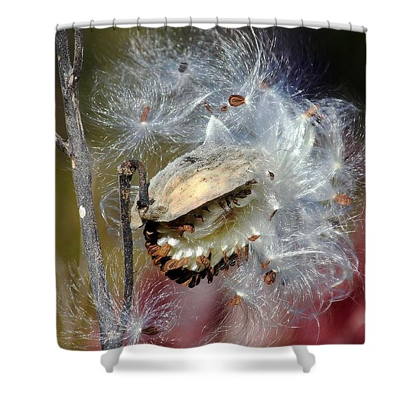 Milkweed Silk Shower Curtain