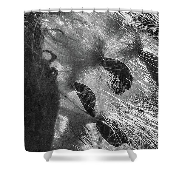 Milkweed Sunburst In Black And White Shower Curtain