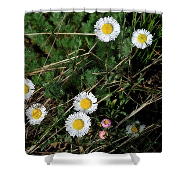 Mini Daisies Shower Curtain