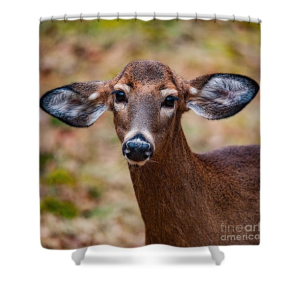 Miss Deer 1 Shower Curtain