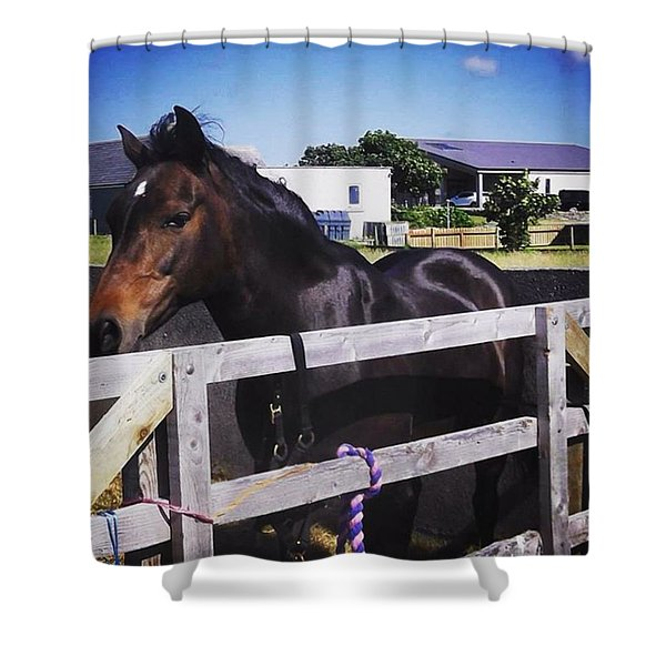 Missing Orkney's County Show This Year Shower Curtain