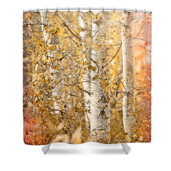 Misted Shower Curtain