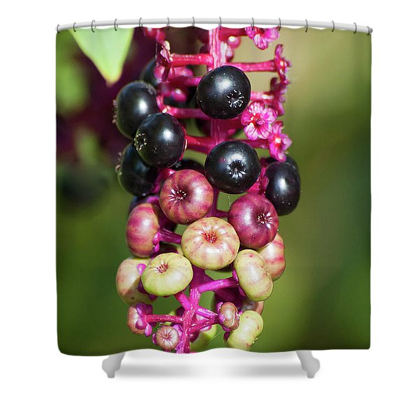 Mixed Berries On Branch Shower Curtain
