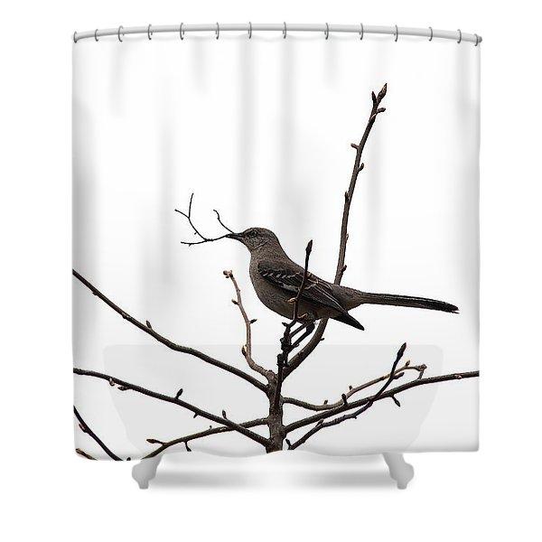 Mockingbird With Twig Shower Curtain