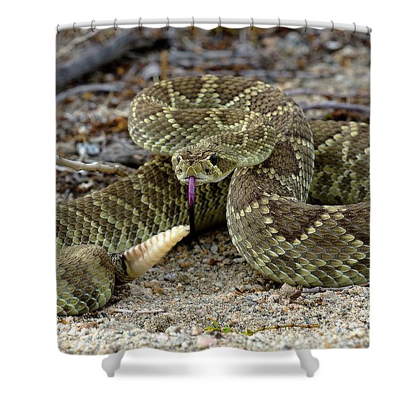 Mohave Green Rattlesnake Striking Position 3 Shower Curtain