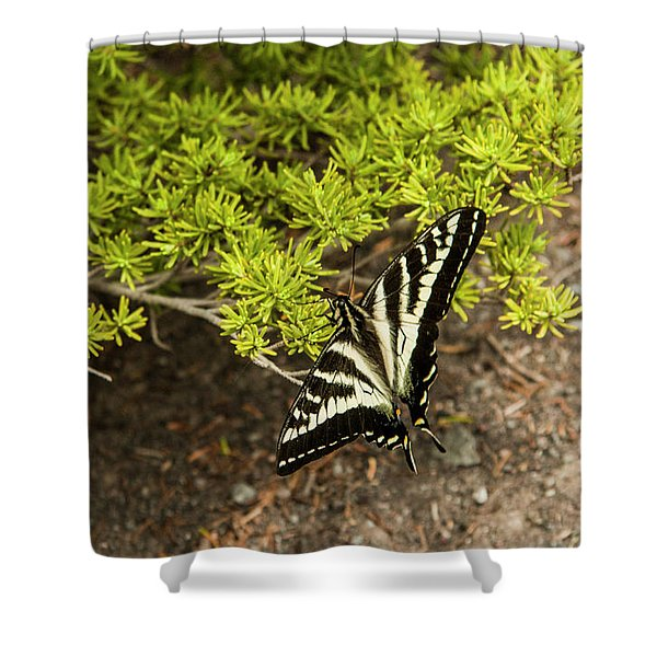 Momentary Rest Stop Shower Curtain