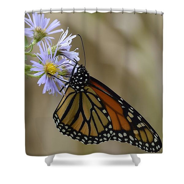 Monarch 2015 Shower Curtain