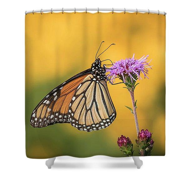 Monarch 2016-3 Shower Curtain