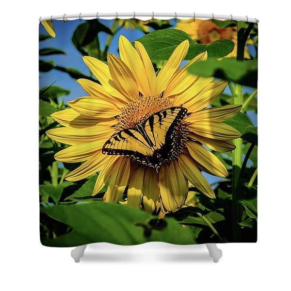 Male Eastern Tiger Swallowtail - Papilio Glaucus And Sunflower Shower Curtain